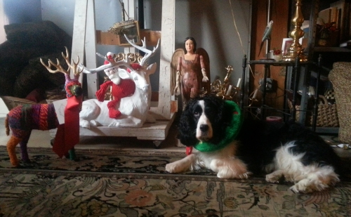 """CHRISTMAS DAY 2013 JASPAR'S """"NEW"""" SISTER: A  WINGED STARING MINIATURE HUMAN; CATHERINE L. JOHNSON;"""