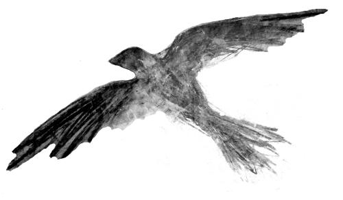 BLACKBIRD CATHERINE L. JOHNSON; CATHERINE L. JOHNSON;