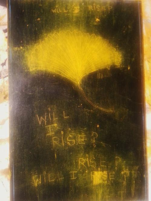 GinkgoWINGS: WILLIRISE DECEMBER 2013 studio CATHERINE L. JOHNSON; CATHERINE L. JOHNSON;