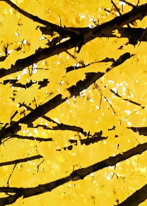 TREES Yellow Night: RISE II  2012 CATHERINE L. JOHNSON; CATHERINE L. JOHNSON;