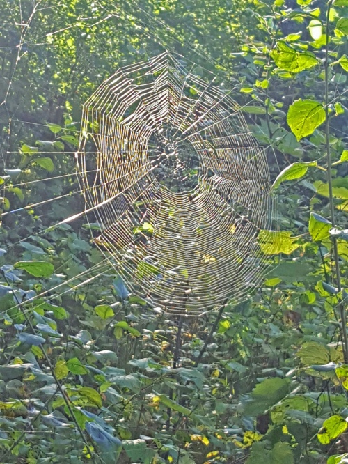 spiderweb_afton_17sept2016_b