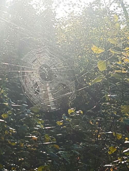 spiderweb_afton_17sept2016_b1