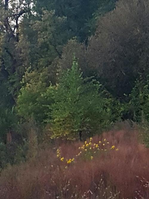 1oct_715pm_vento_nature_sanctuary