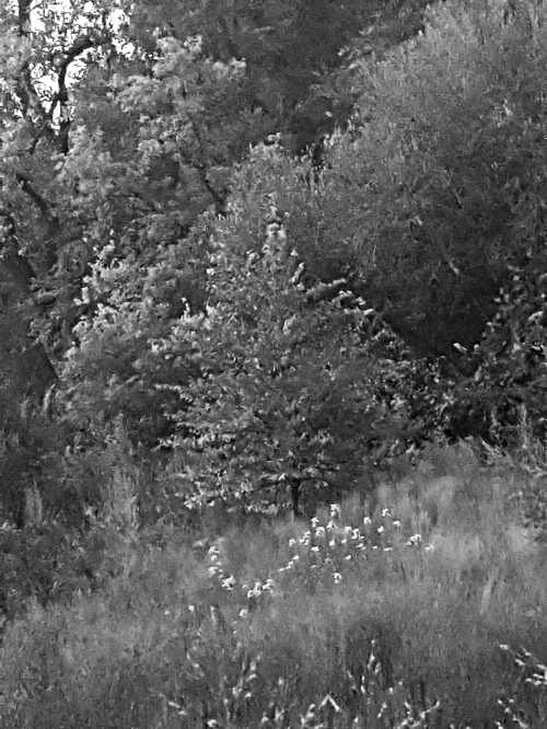 1oct_715pm_vento_nature_sanctuary_bw