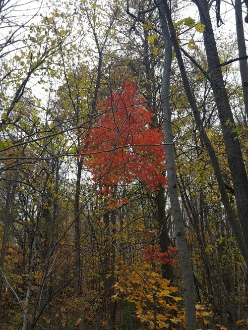 glen_lake_park_16oct2016_hoveringred